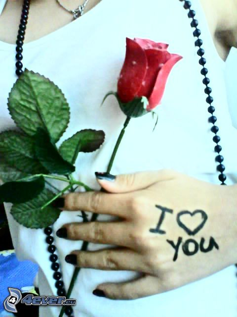 I love you, rosa, camiseta