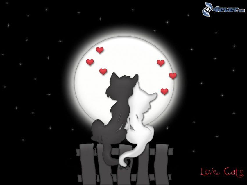 gatos enamorados, gato macho y gato hembra, corazones, Luna llena, cerco de madera, gatos de la historieta