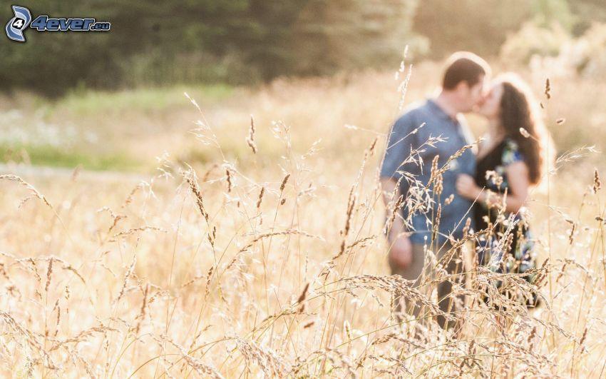 pareja, beso, hierba alta, paja de hierba, hierba seca