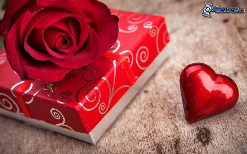 regalo, rosa roja, corazón