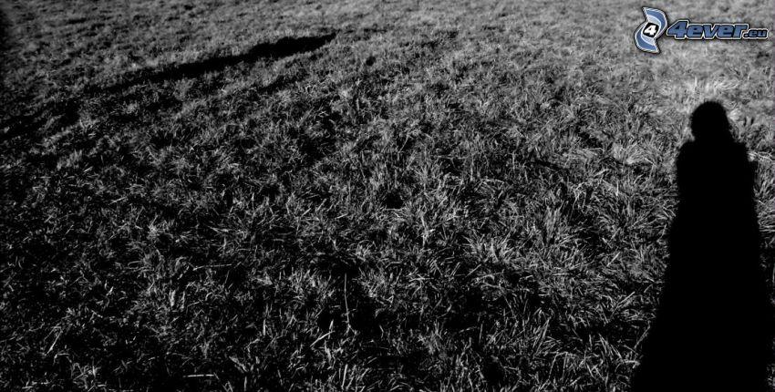 separación, sombra