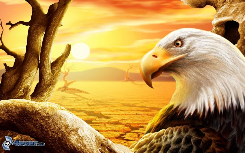 águila, puesta de sol anaranjada, desierto