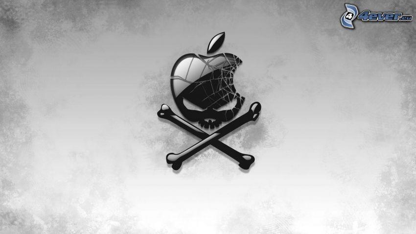 Apple, cráneo, huesos, fondo gris