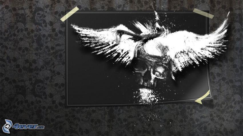 cráneo, alas blancas, dibujo, blanco y negro