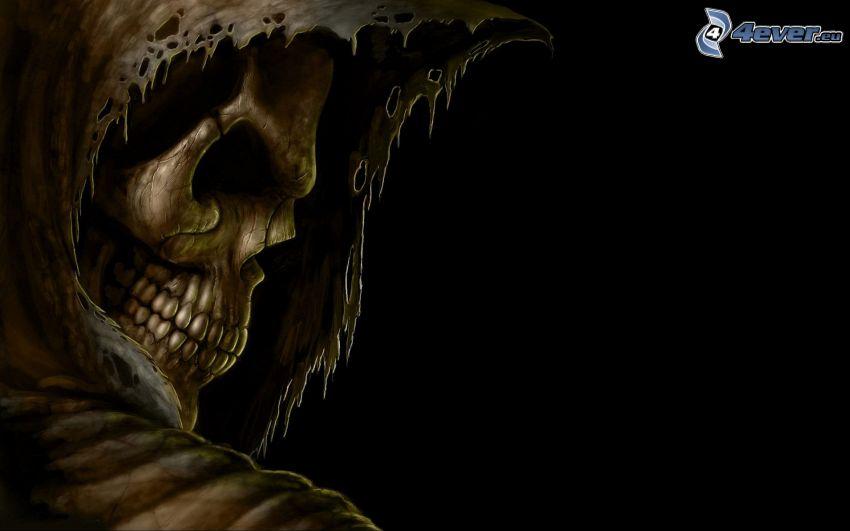 descarnada, cráneo