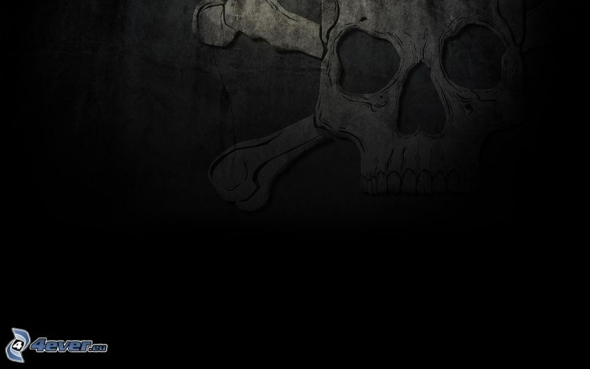 cráneo, fondo negro