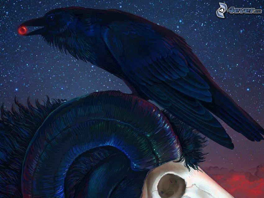 cuervo, anillo, muflón, noche