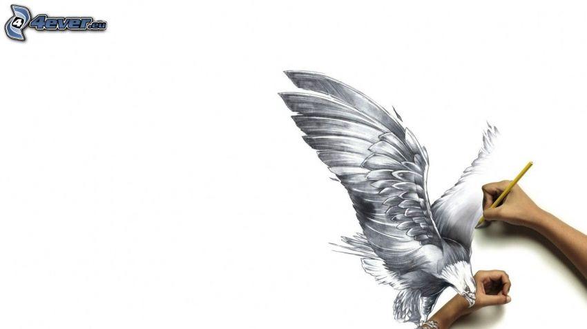 águila, 3D, manos, lápiz, dibujo