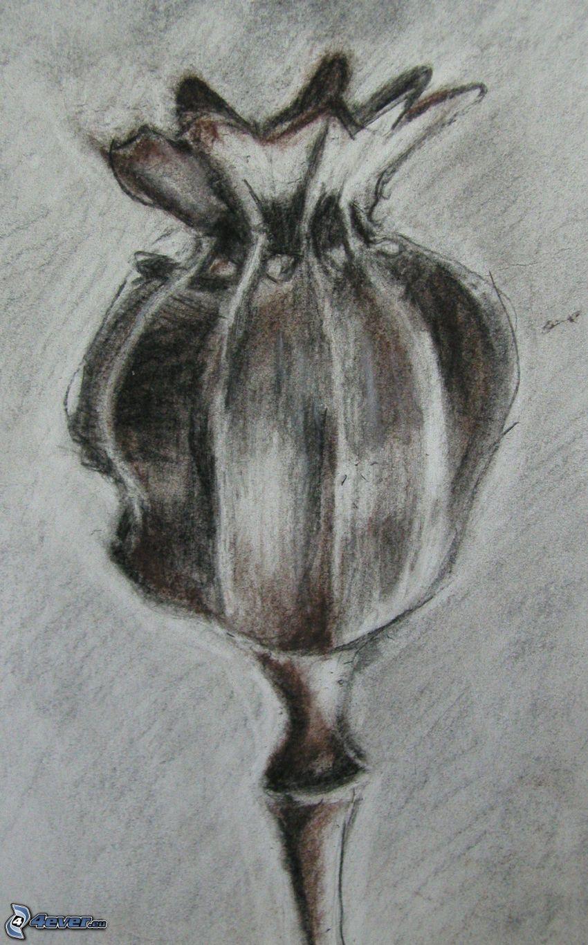 cabeza de una amapola
