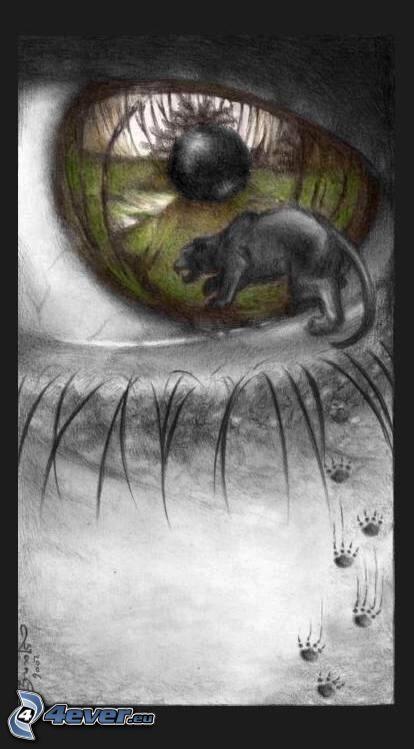 ojo de una historieta, puma, huellas