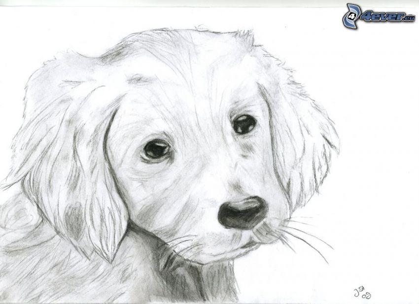 perro pintado a mano, cachorro