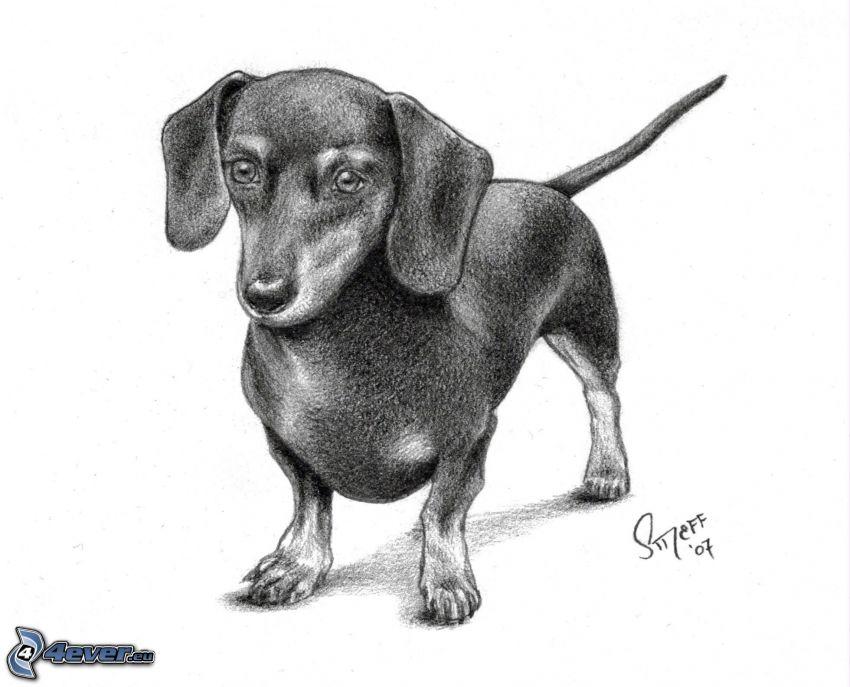 perro salchicha dibujado, perro pintado a mano