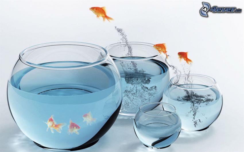 acuario, peces, salto