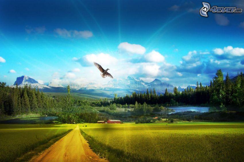 águila, prado, nubes