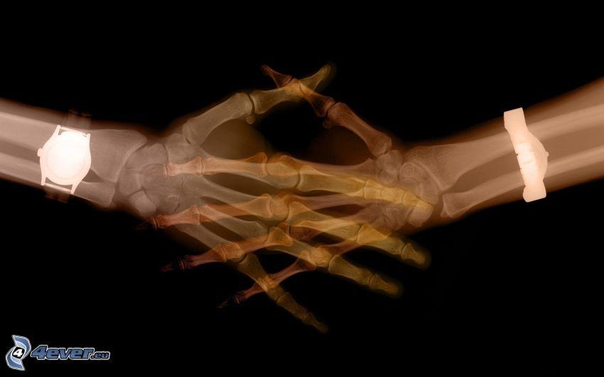 apretón de manos, huesos