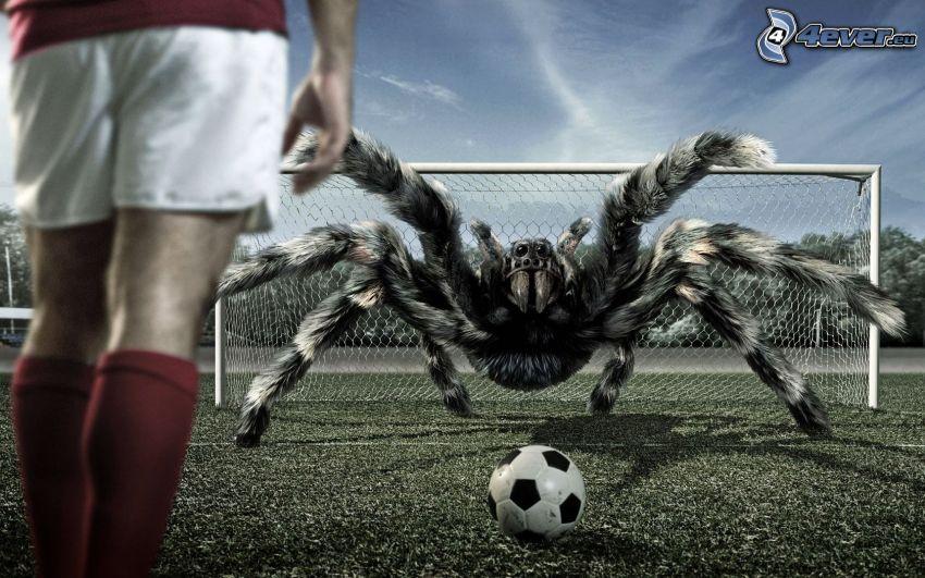 araña, fútbol