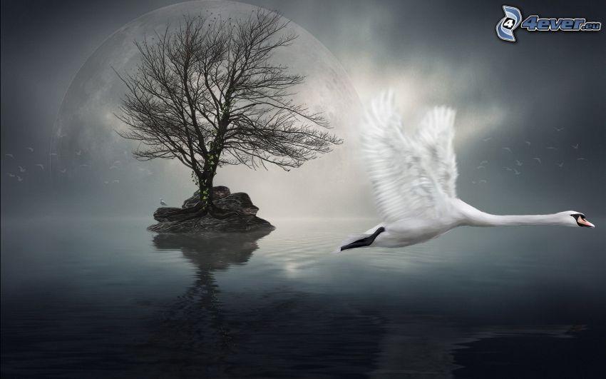 cisne, vuelo, isleta, árbol deshojado, lago, planeta