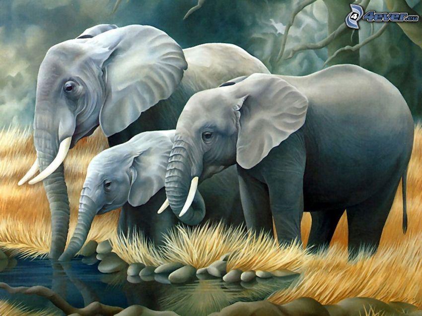 elefantes, cachorro, piscina, dibujo