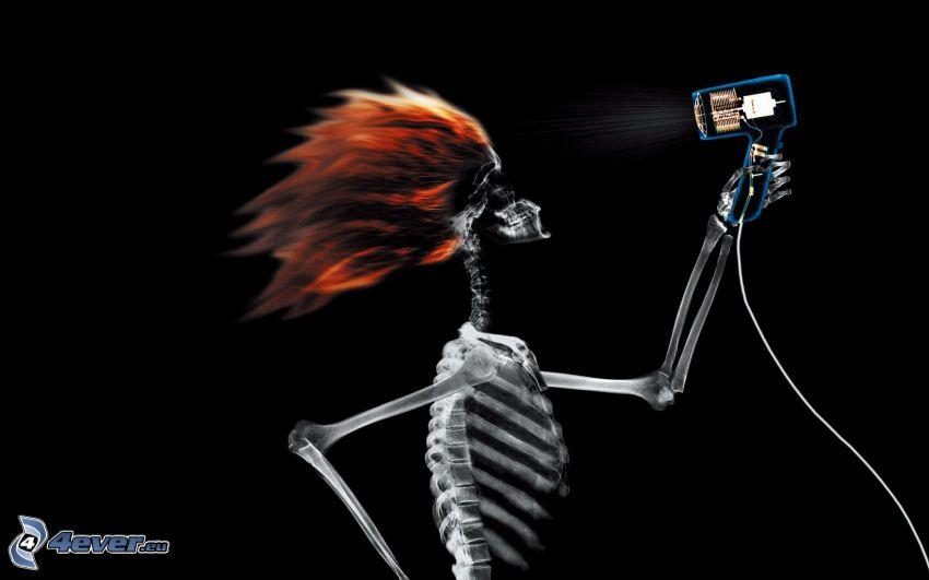 esqueleto, secadora de pelo