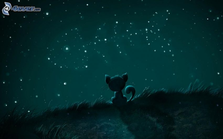 gatito, pez, gato de la historieta, constelación