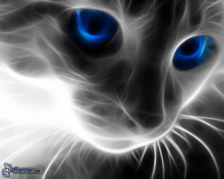 gato fractal, ojos azules, mirada