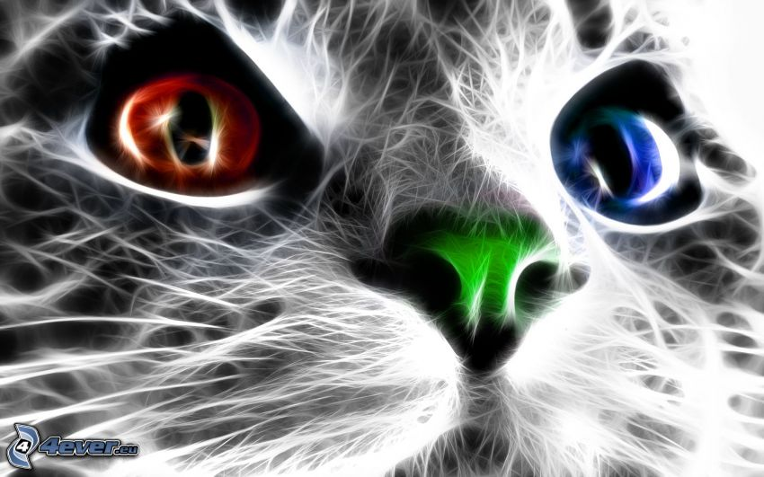gato fractal, ojos de color