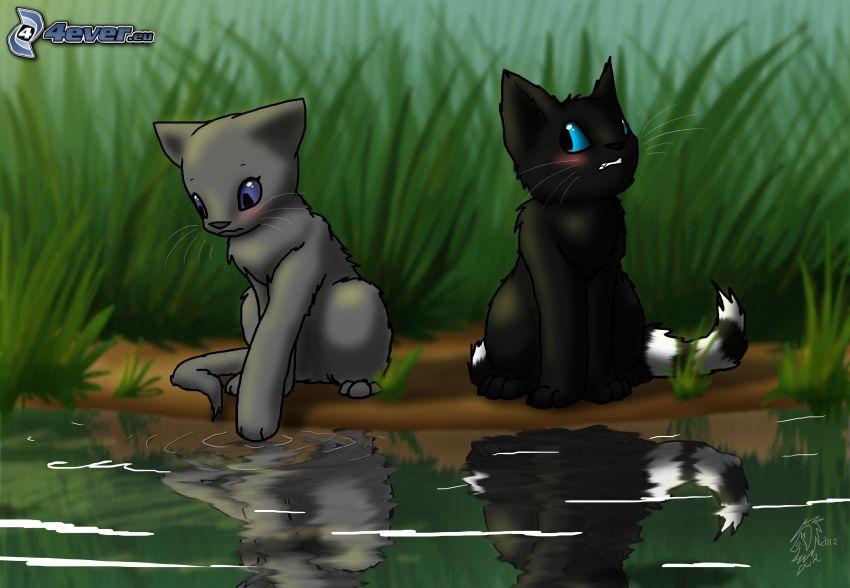 gatos de la historieta, lago, reflejo