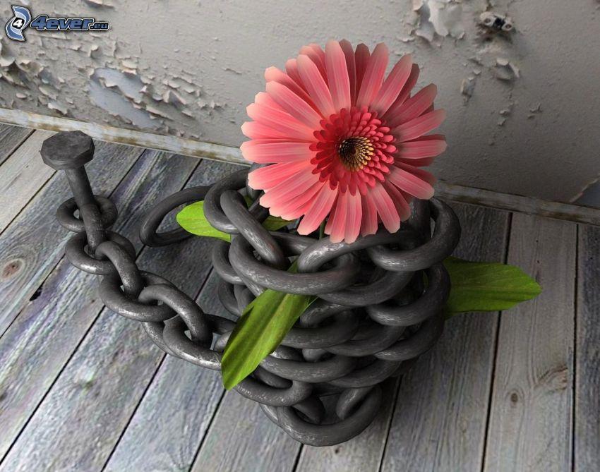 gerbera, cadena, cobertura de madera, pared agrietada