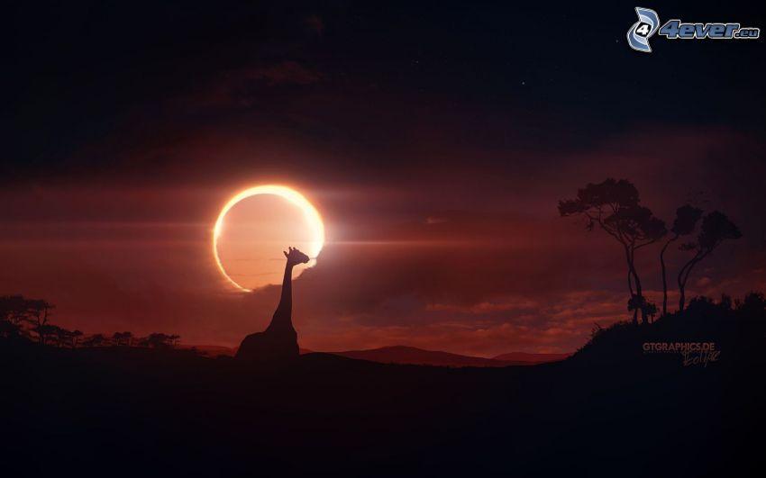 la silueta de la jirafa, sabana, siluetas, sol