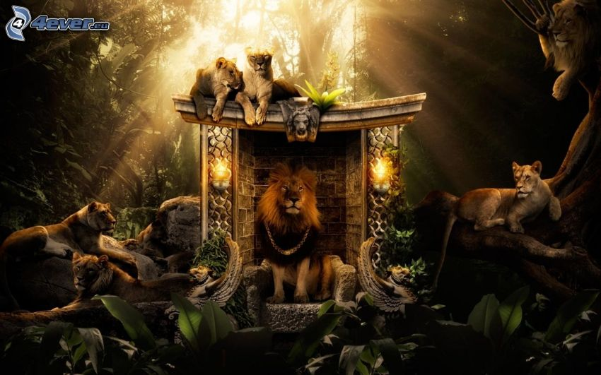 leones, león, leonesas