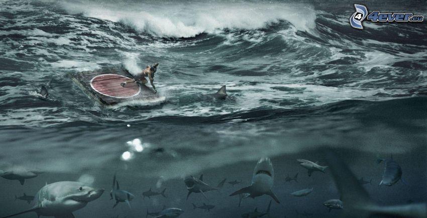 luchador, mar, tiburones