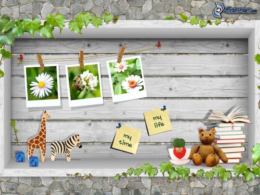 oso de peluche, libros, fotos, jirafa, zebra