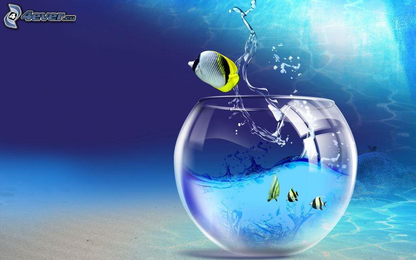 peces, acuario, agua, libertad