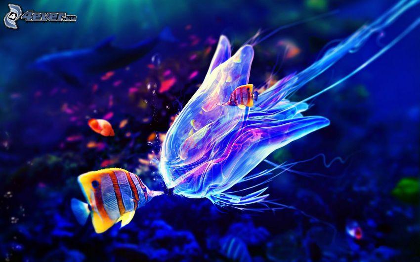 peces de colores, medusas