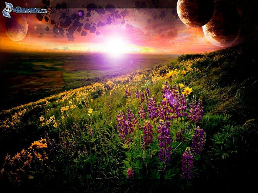 puesta del sol, flores de coolor violeta, planetas