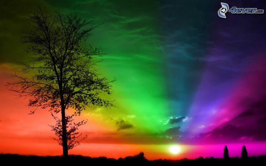 silueta de un árbol, colores, puesta del sol