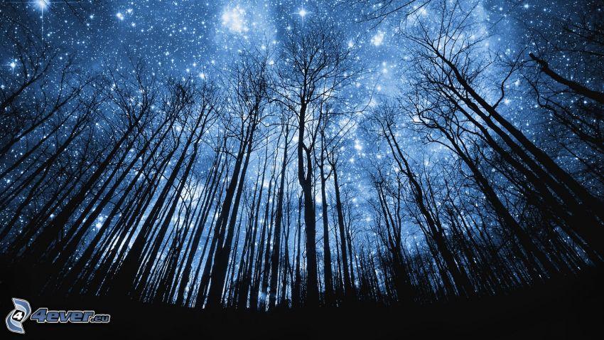 siluetas de los árboles, bosque, universo