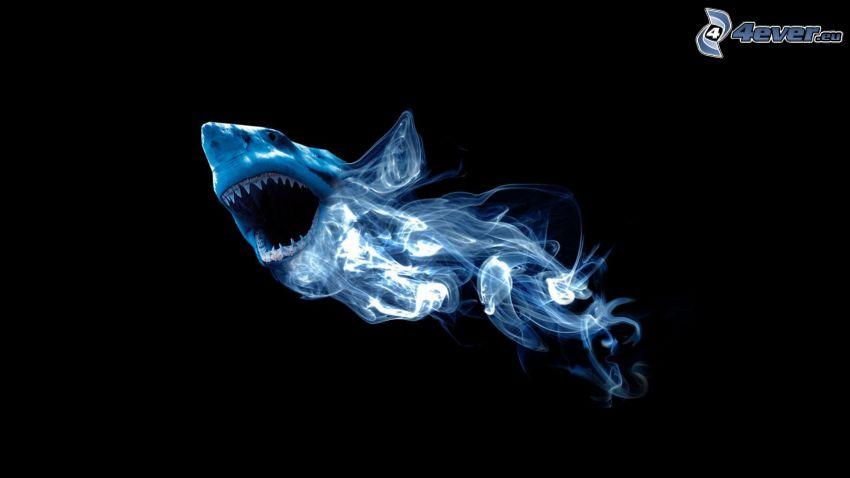 tiburón, humo
