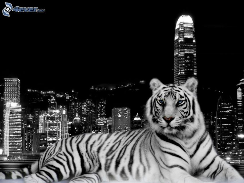 tigre, ciudad, Hong Kong