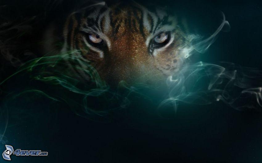 tigre, humo