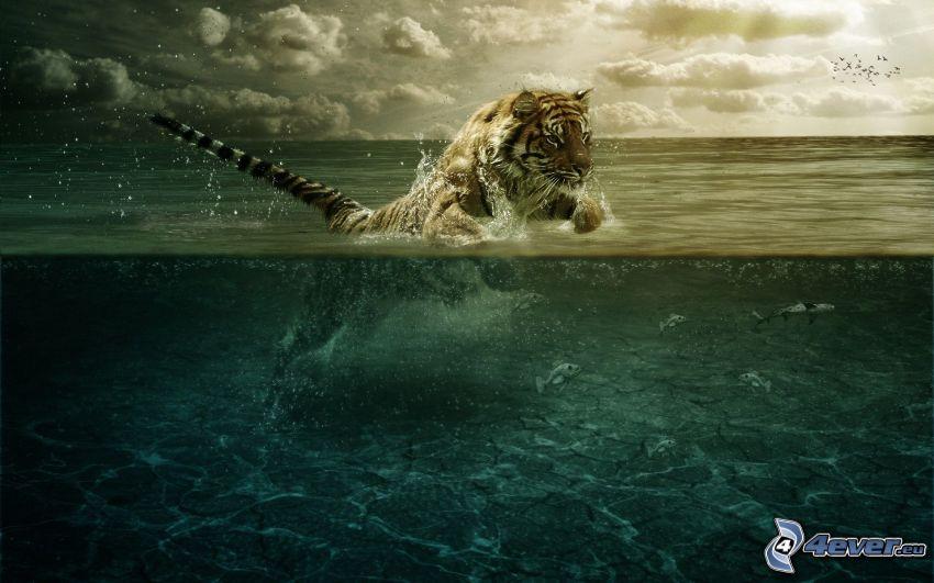 tigre, mar