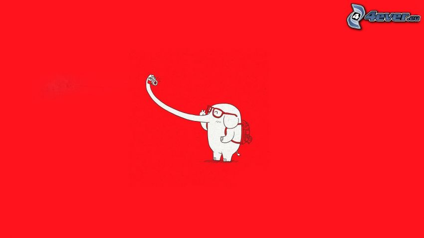 elefante, fondo rojo