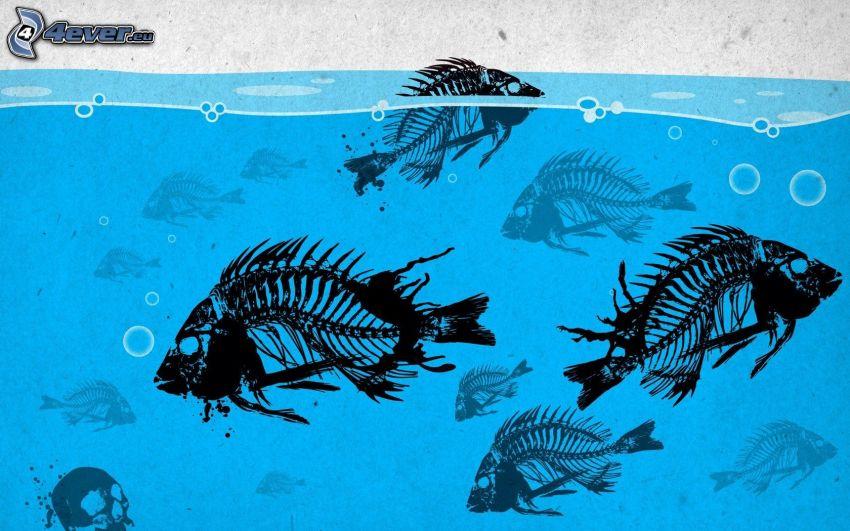 esqueletos, peces