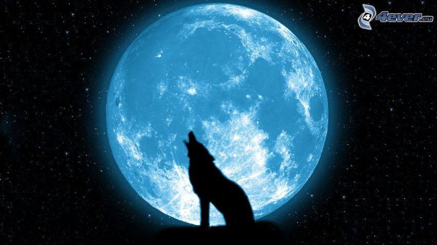 lobo aúllando, silueta, mes, cielo estrellado