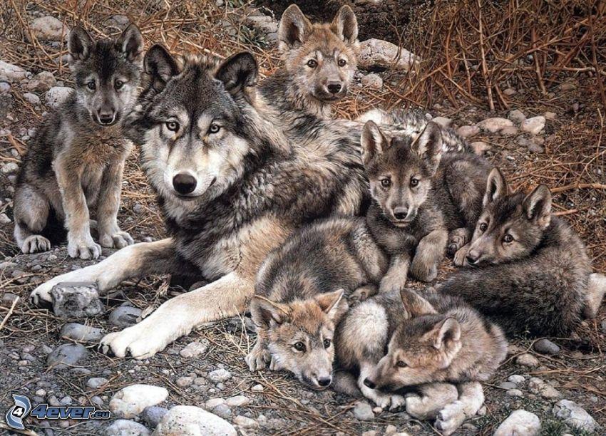 lobos de dibujos animados