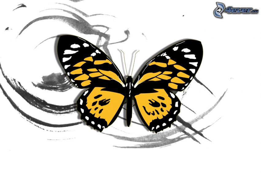 mariposa, líneas