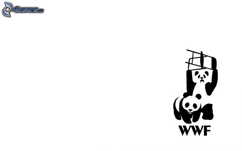pandas, WWF
