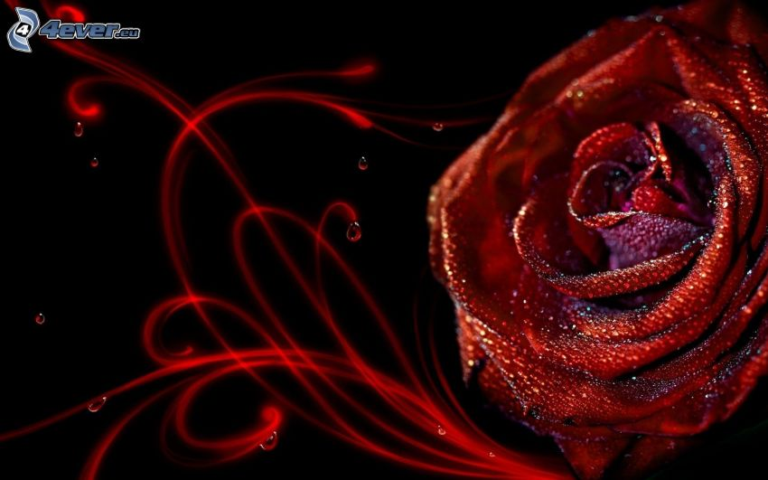 rosa, líneas rojas