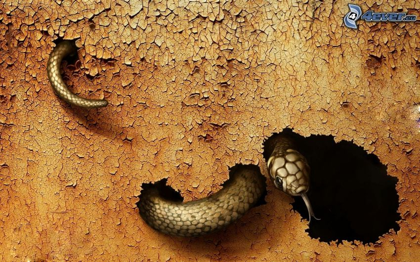 serpiente, agujero