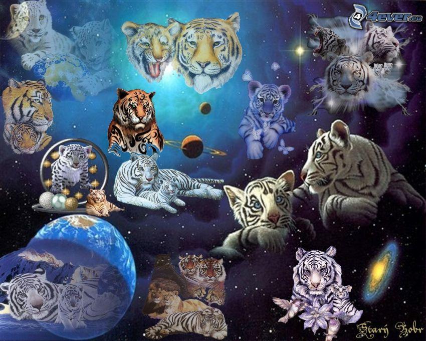 tigre, universo